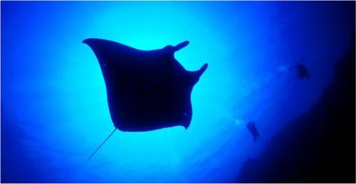 沖縄の魅力満載の海洋博公園の楽しみ方〔LEADERS online〕 |医療ニュース|Medical Tribune