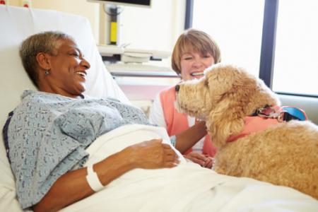 ICUでセラピー犬が活躍?
