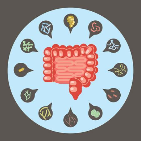 自己便移植で抗菌薬投与後の腸内細菌を回復