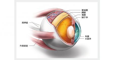 眼で診断、プリオン病