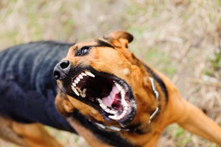14年ぶりに狂犬病の輸入症例発生